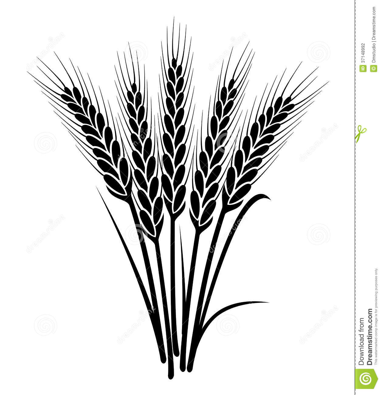 Vector Bunch Of Wheat Ears Stock Vector Illustration Of