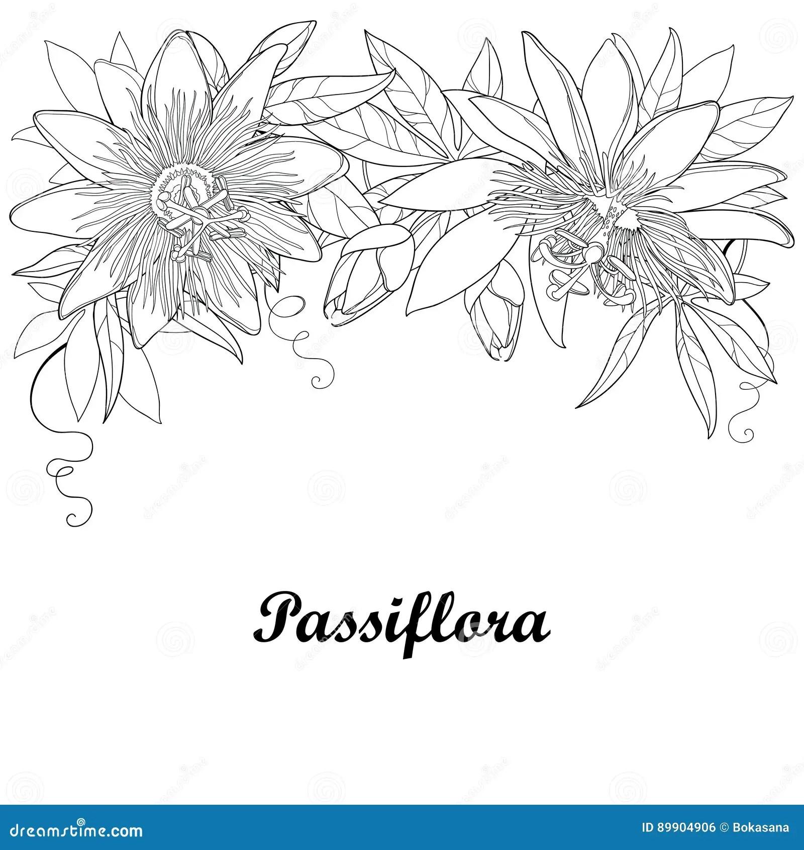 Garland Of Tropical Flowers Cartoon Vector
