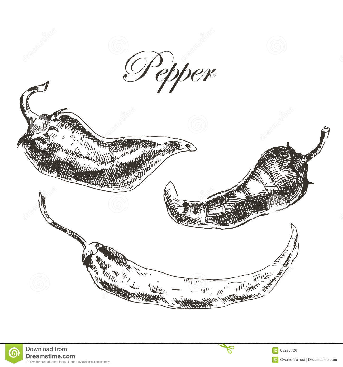 Vector Hand Drawn Chili Pepper Sketch Set Ink And Stock