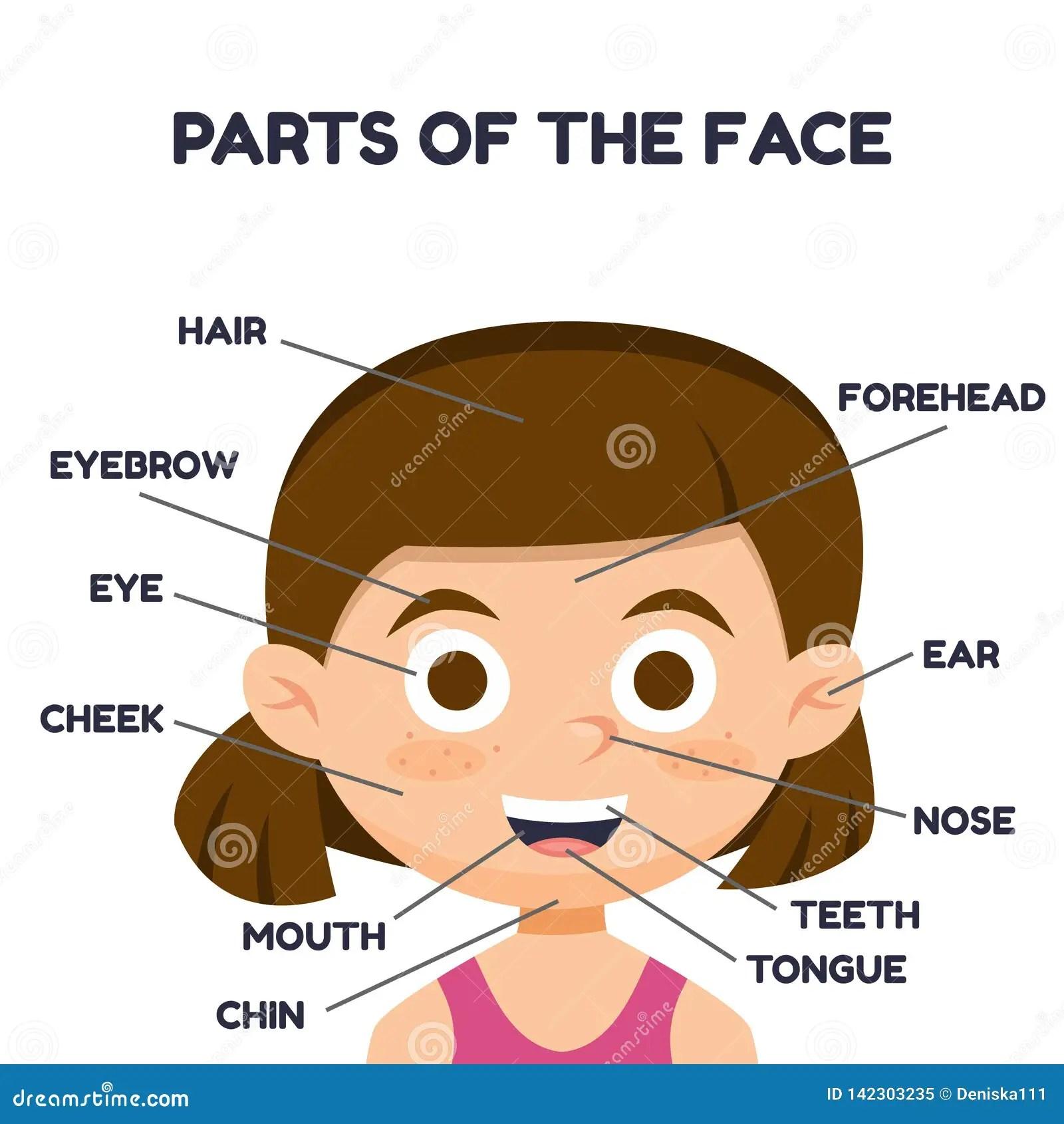 Vector Illustration Of Cartoon Cute Girl Vocabulary Of
