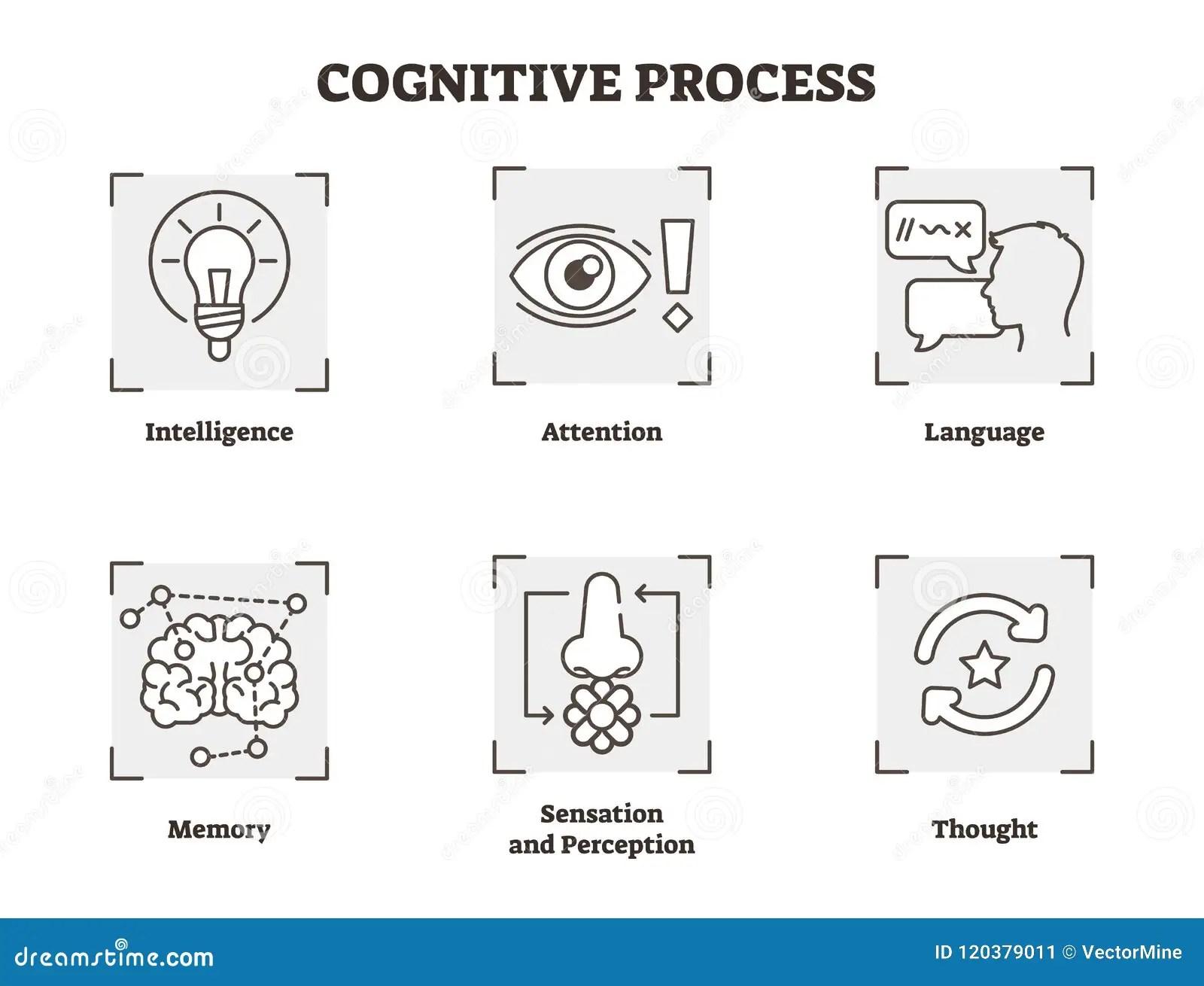 Vector Illustration Set Of Cognitive Process Scheme With