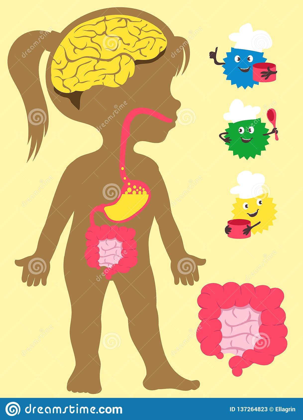 Children Anatomy With Digestive System Royalty Free Stock