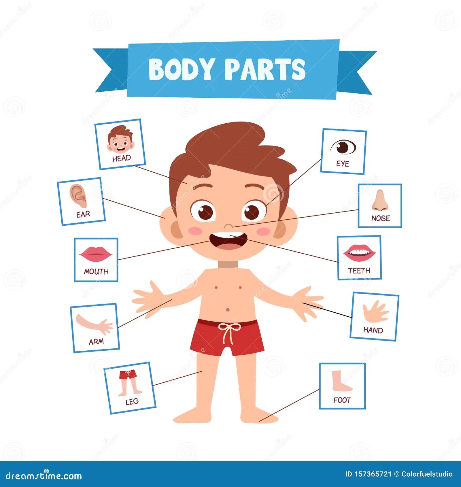 Vector Illustration Of Human Body Stock Illustration