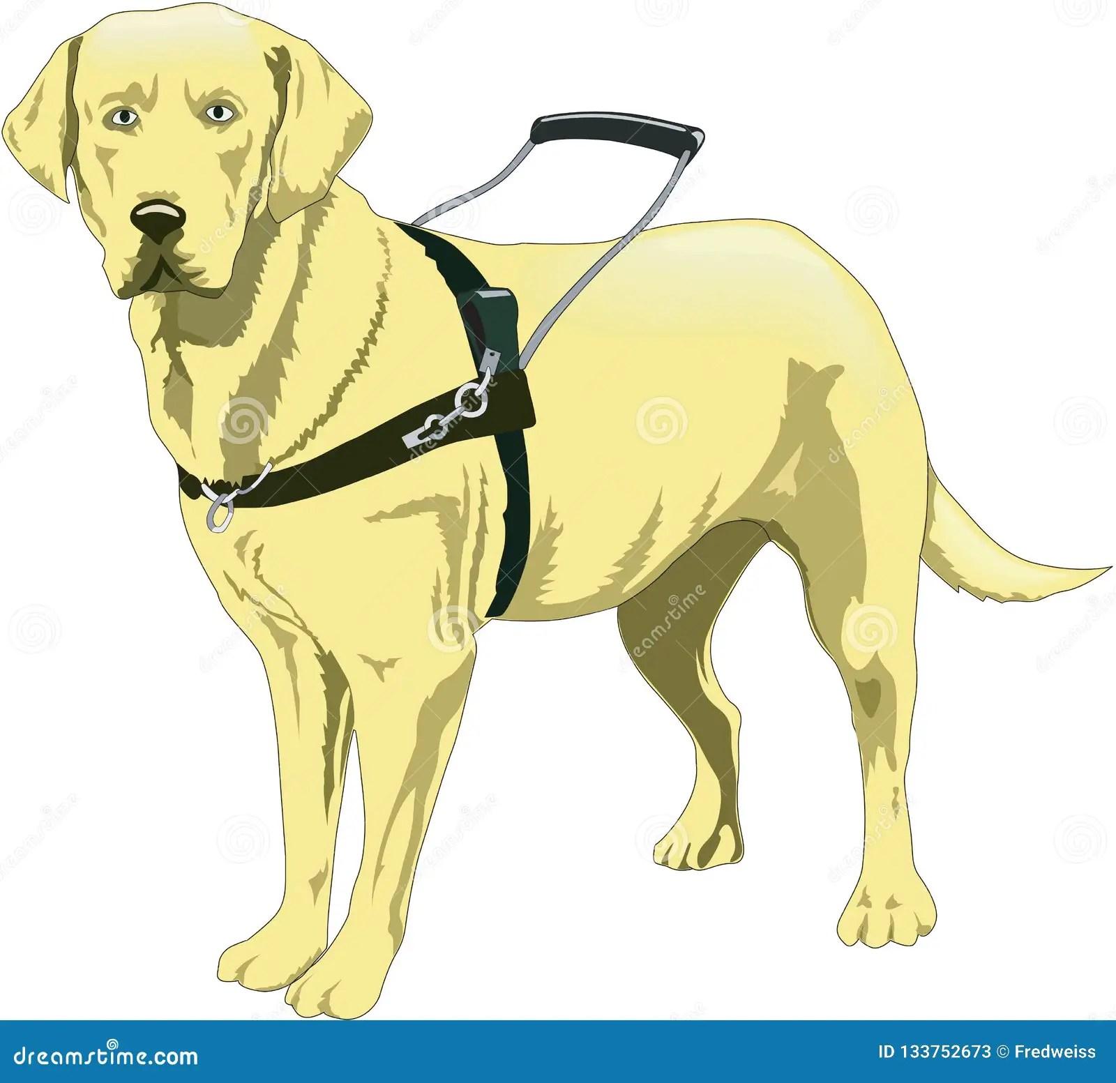 Seeing Eye Guide Dog Illustration Stock Vector
