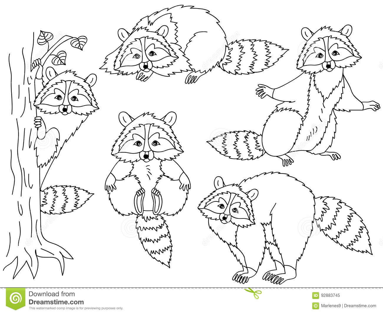 Vector Raccoons Set Stock Vector Illustration Of Animal