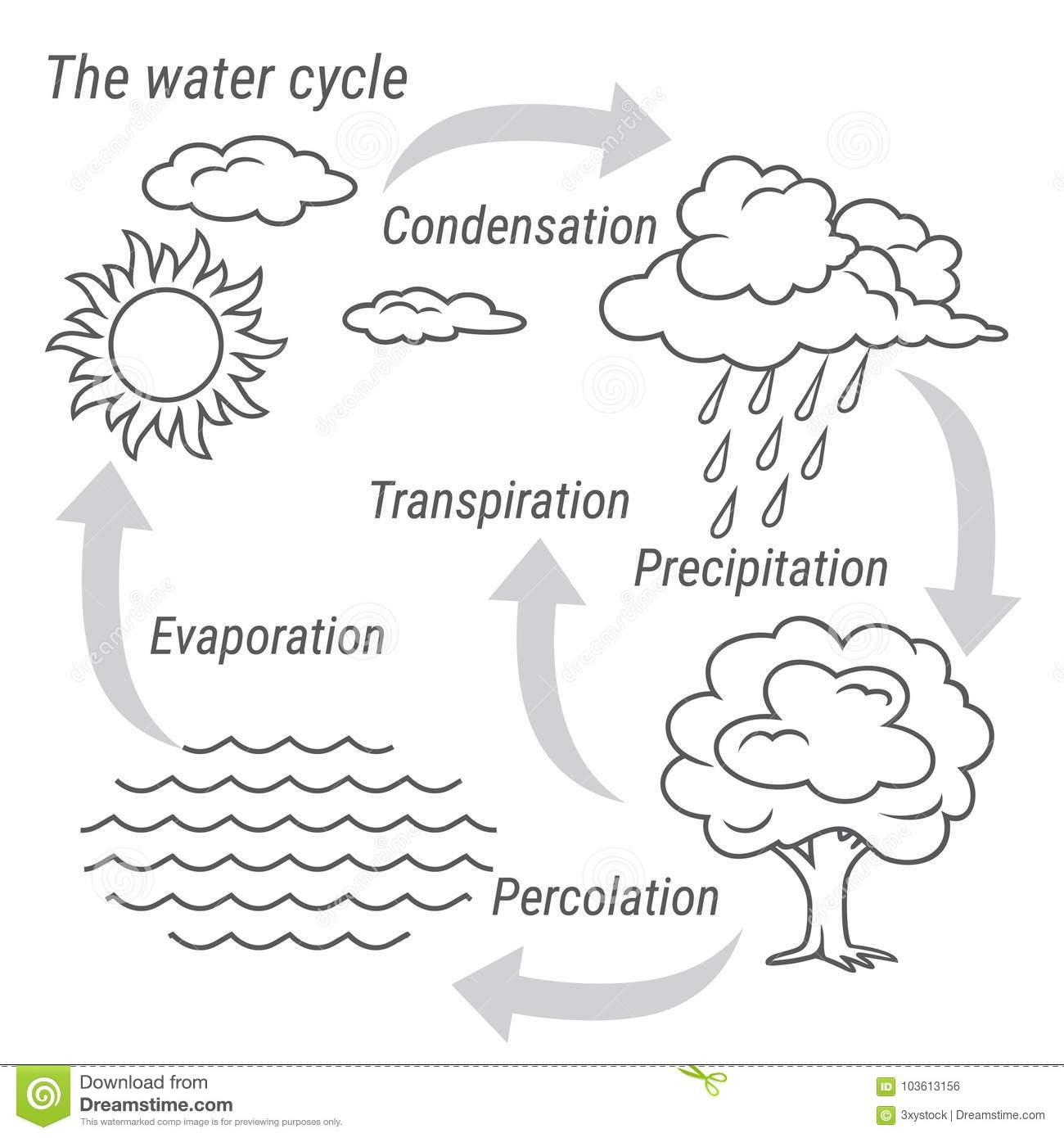 Water Cycle Black And White Stock Vector