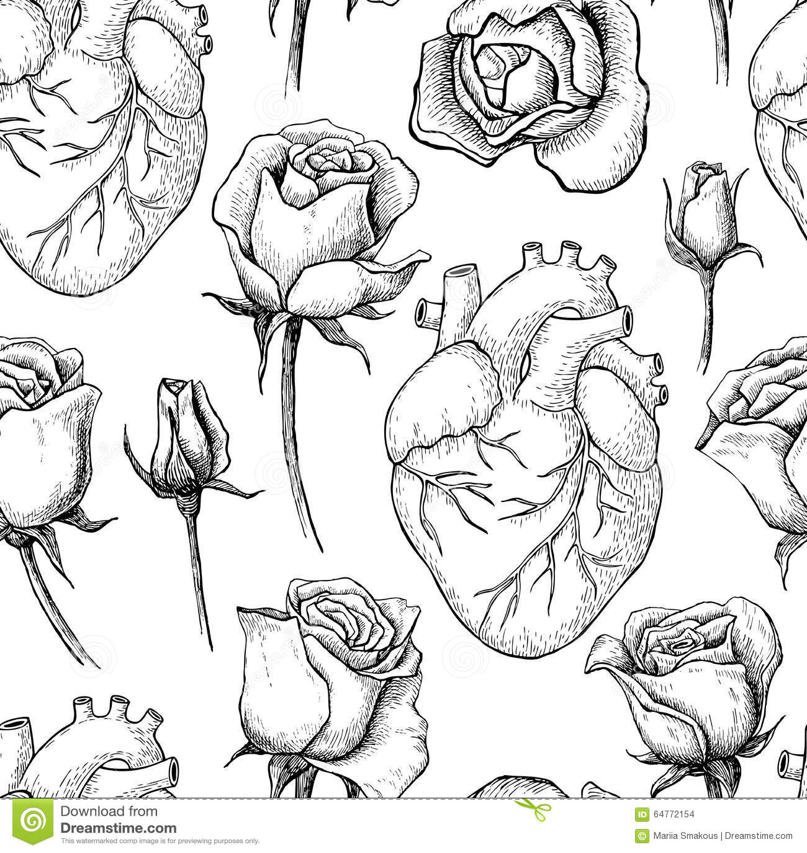 Human Anatomical Heart Cartoon Vector