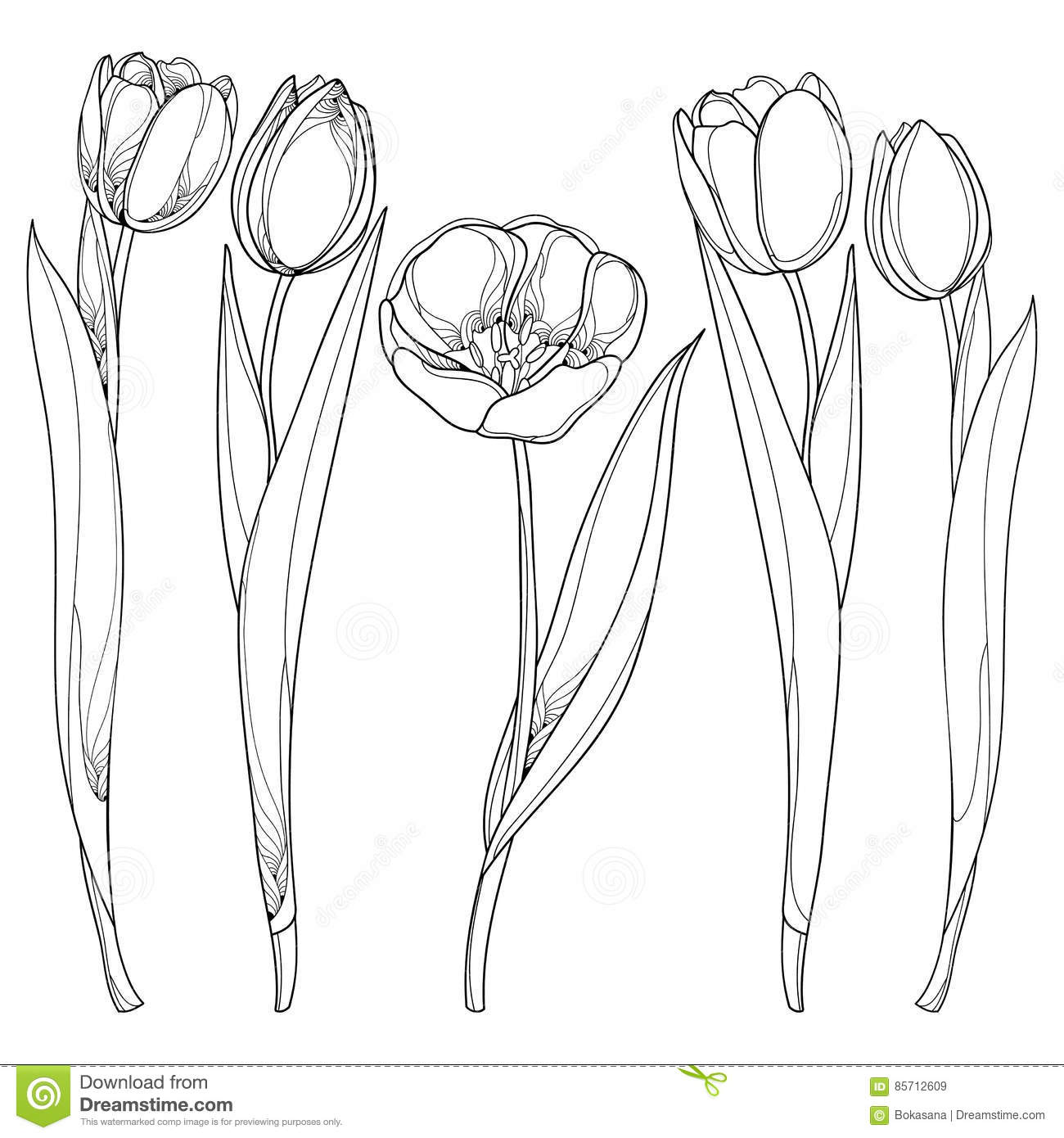 Vector Set With Outline Tulips Flowers Isolated On White
