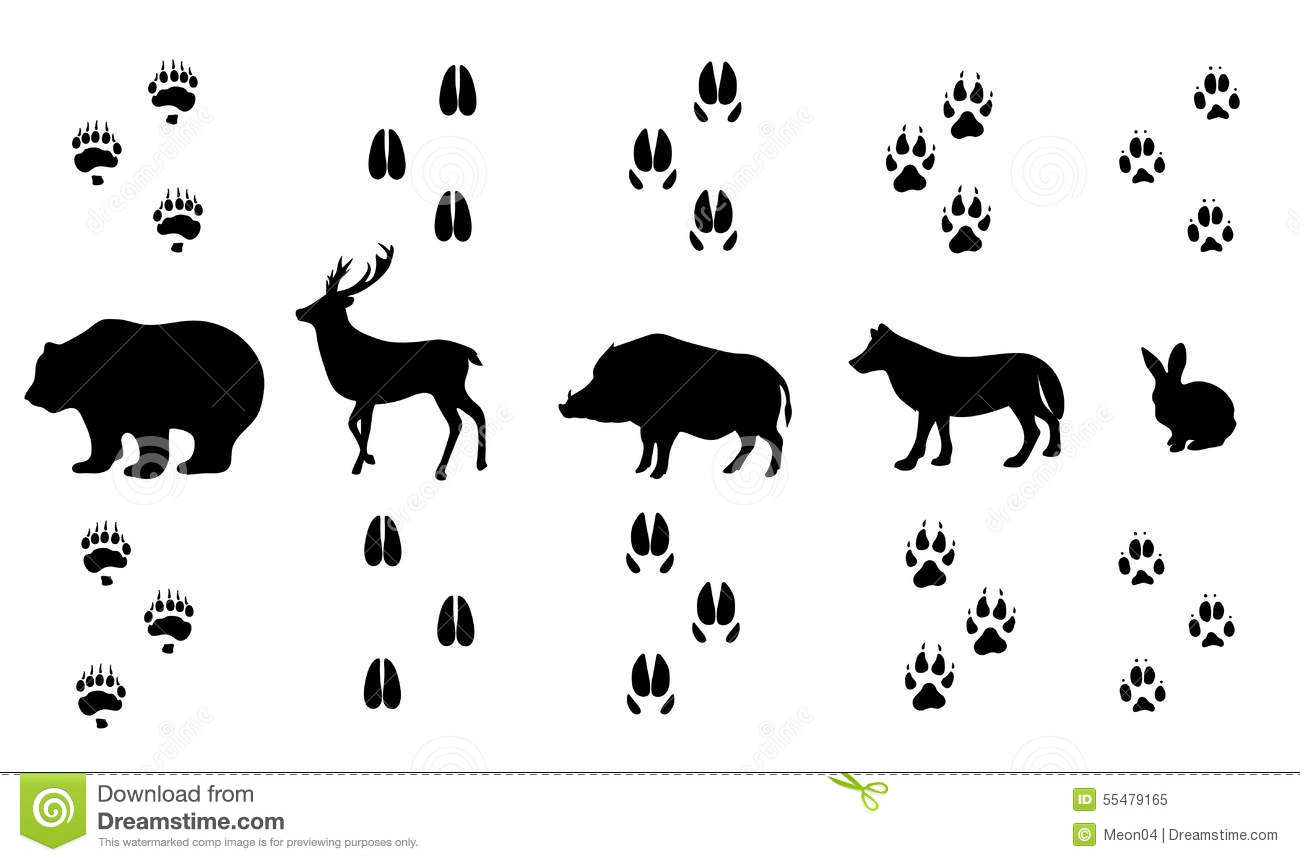 Vector Set Of Walking Wild Wood Animal Tracks Stock Vector