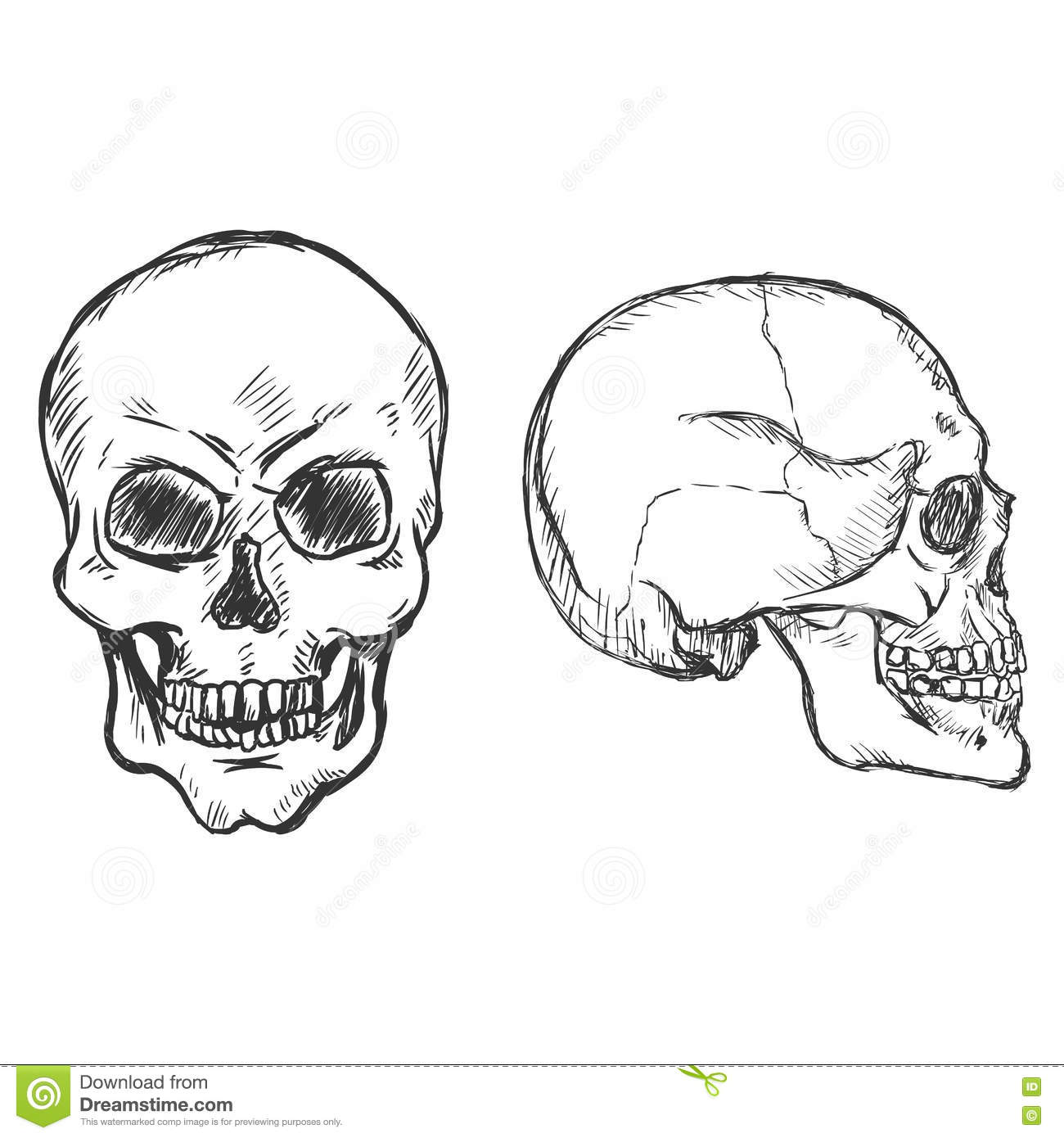 Vector Sketch Skulls Side And Front View Stock