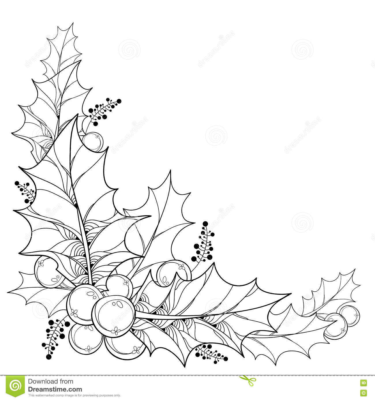Vector Twig With Outline Leaves And Berries Of Ilex Or
