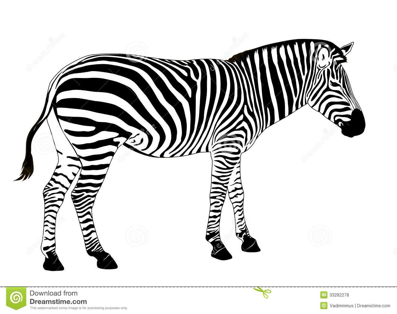Vector Zebra Stock Vector Illustration Of Camouflage