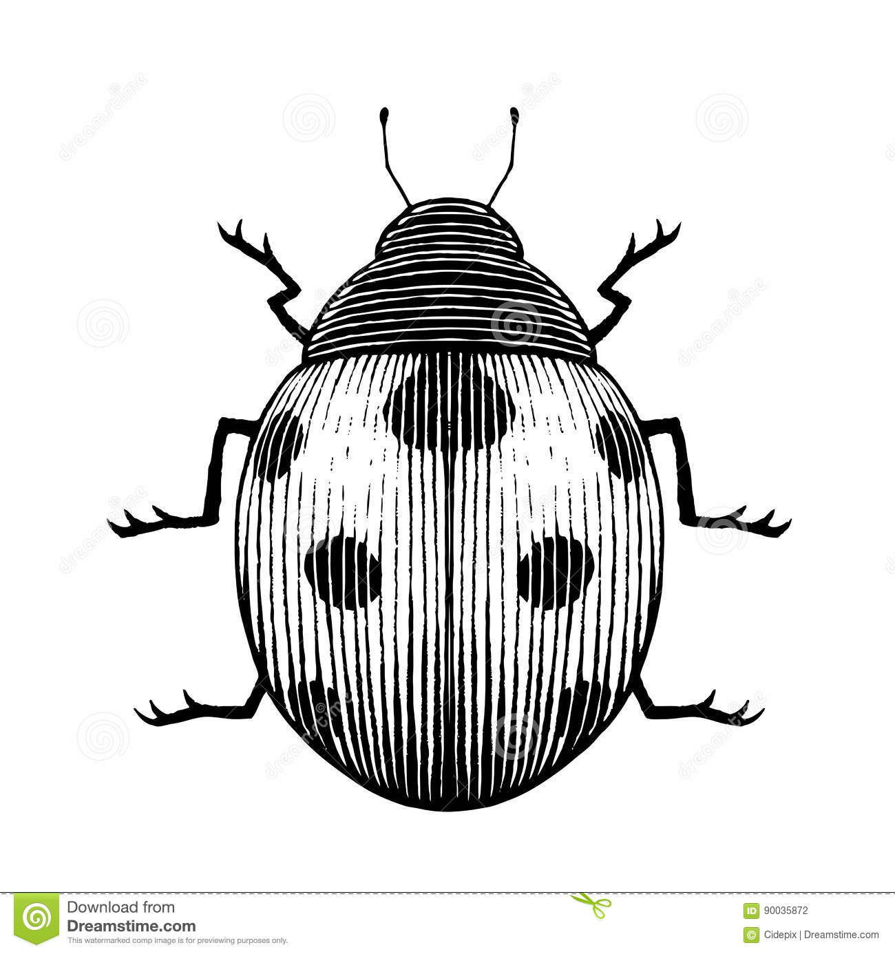 Vectorized Ink Sketch Of A Ladybug Stock Vector