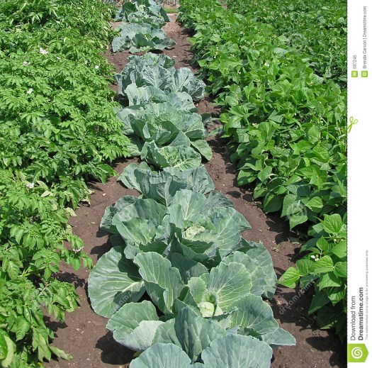 Image result for free pictures of vegetable gardens