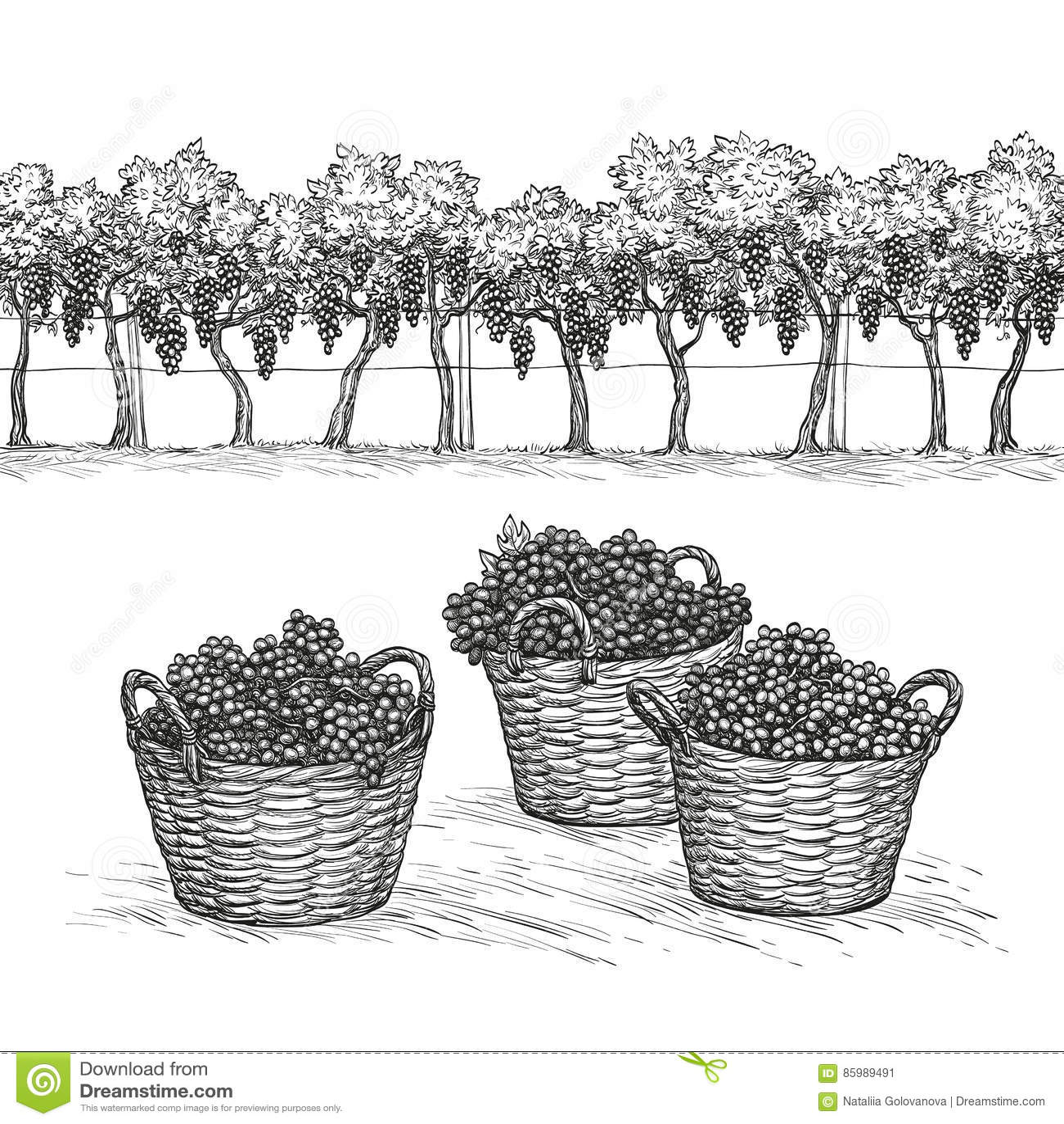 Vineyard Stock Illustrations 8 423 Vineyard Stock
