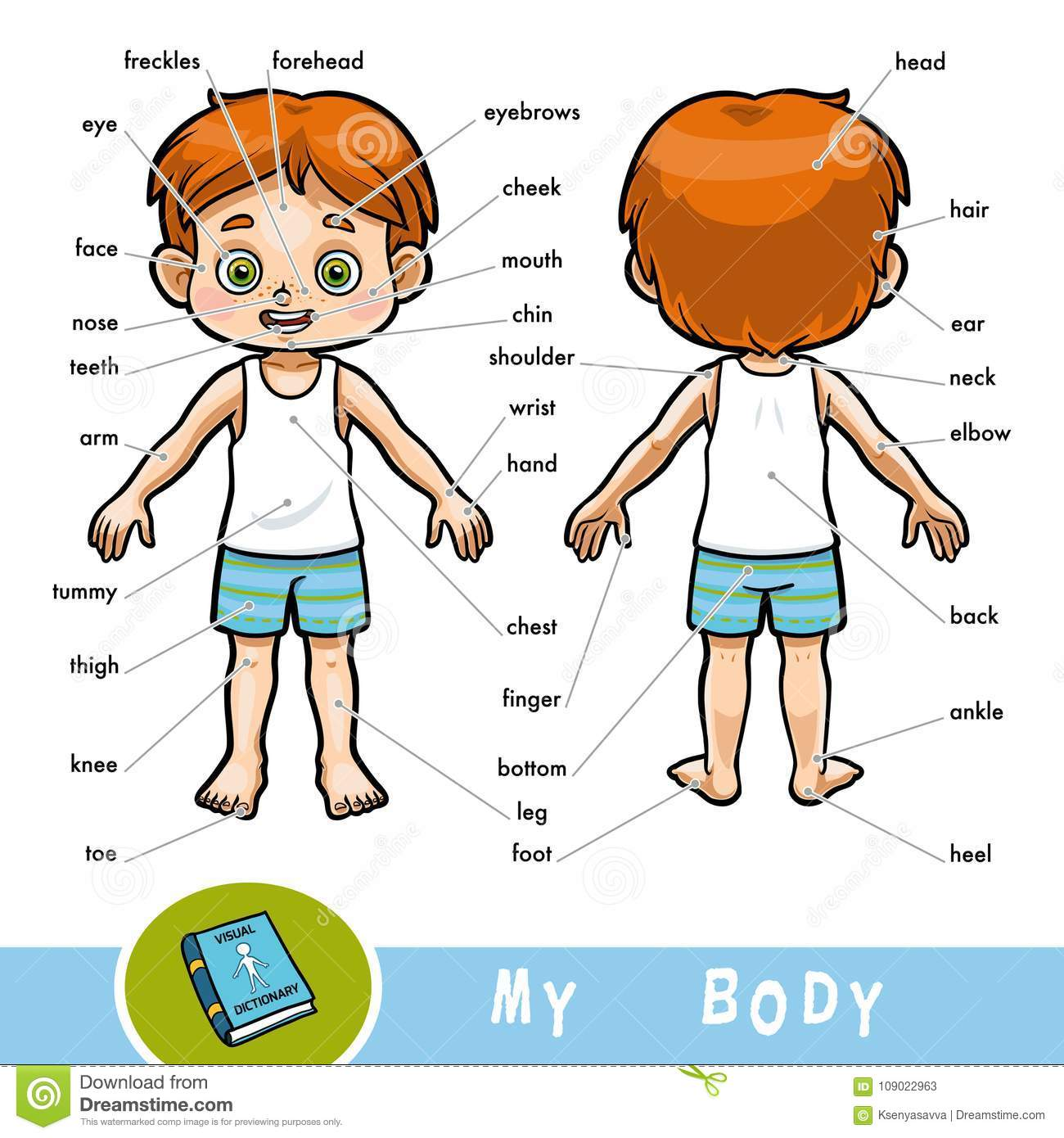 Visual Dictionary For Children About The Human Body The
