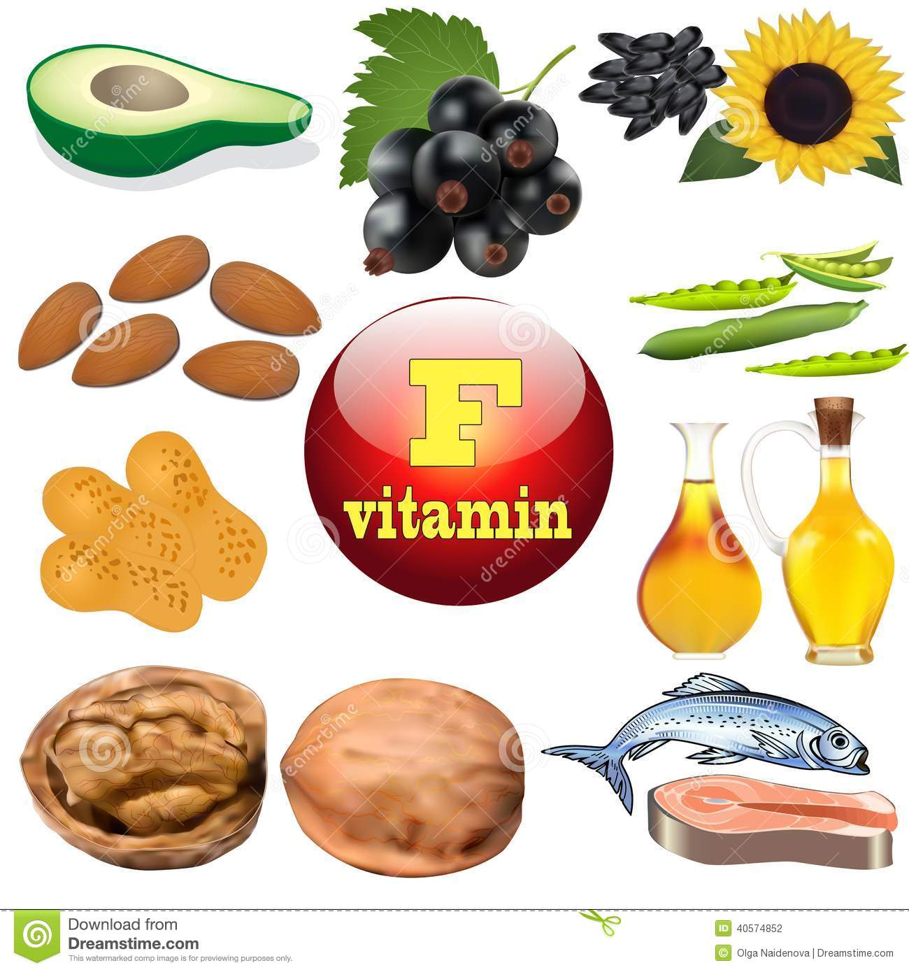 Vitamin F Content Plant And Animal Products Stock Vector
