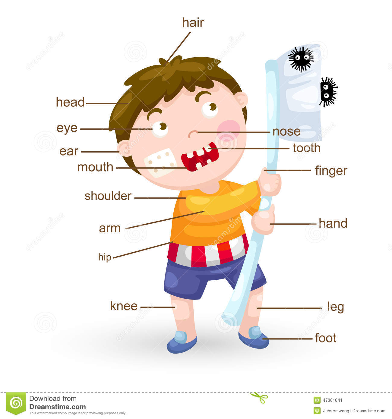 Vocabulary Part Of Body Stock Vector Illustration Of