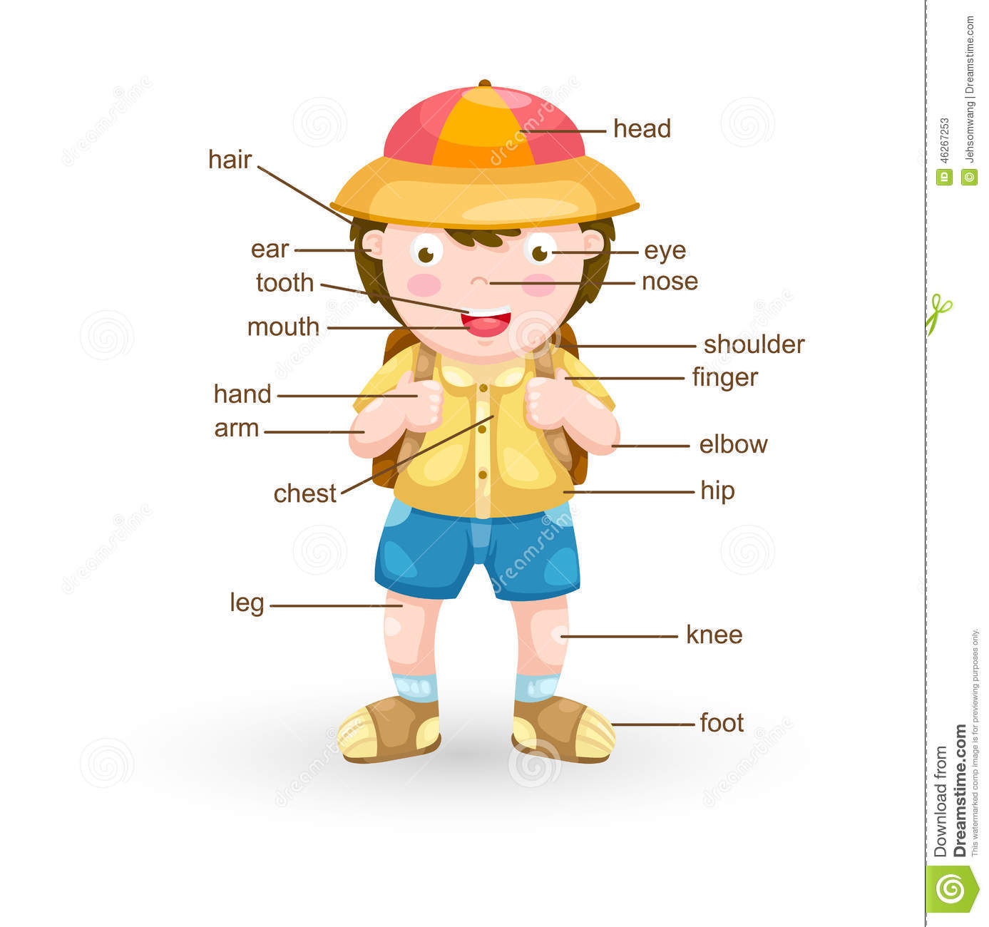 Vocabulary Part Of Body Stock Vector Image Of Person