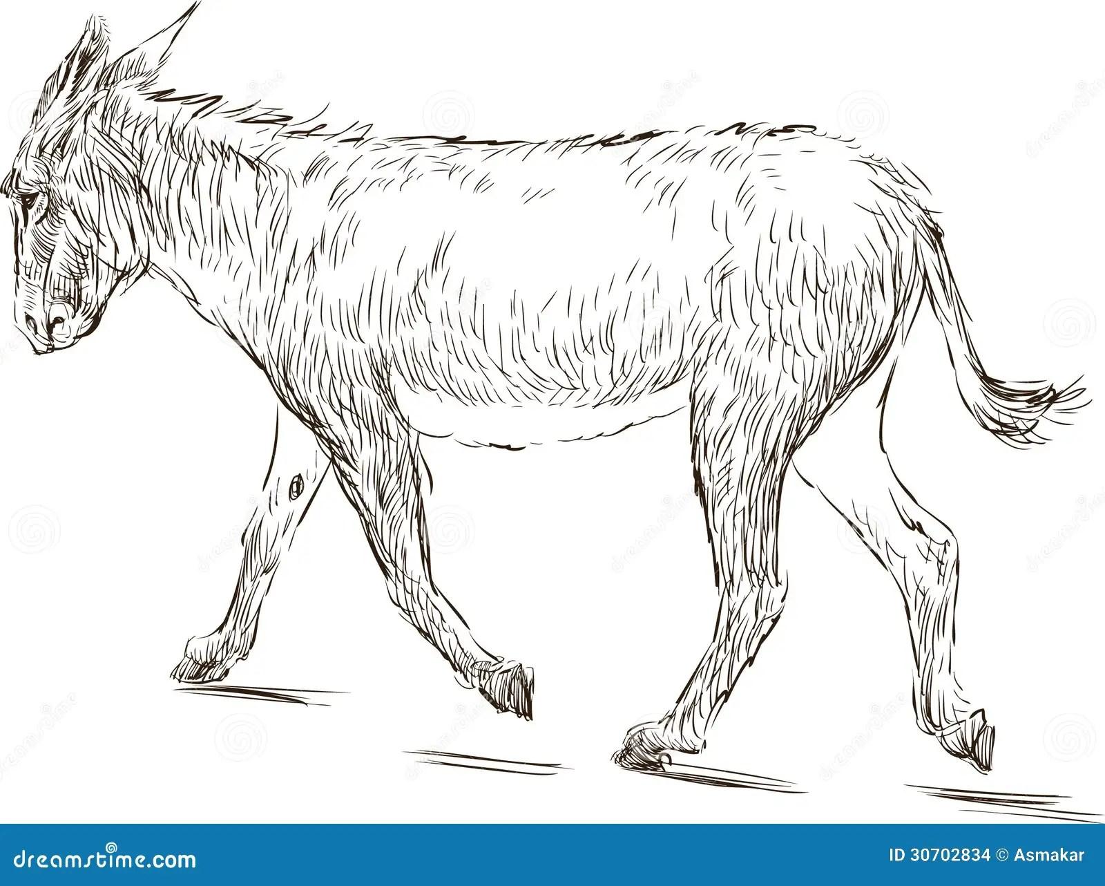 Walking Donkey Stock Vector Illustration Of Longeared