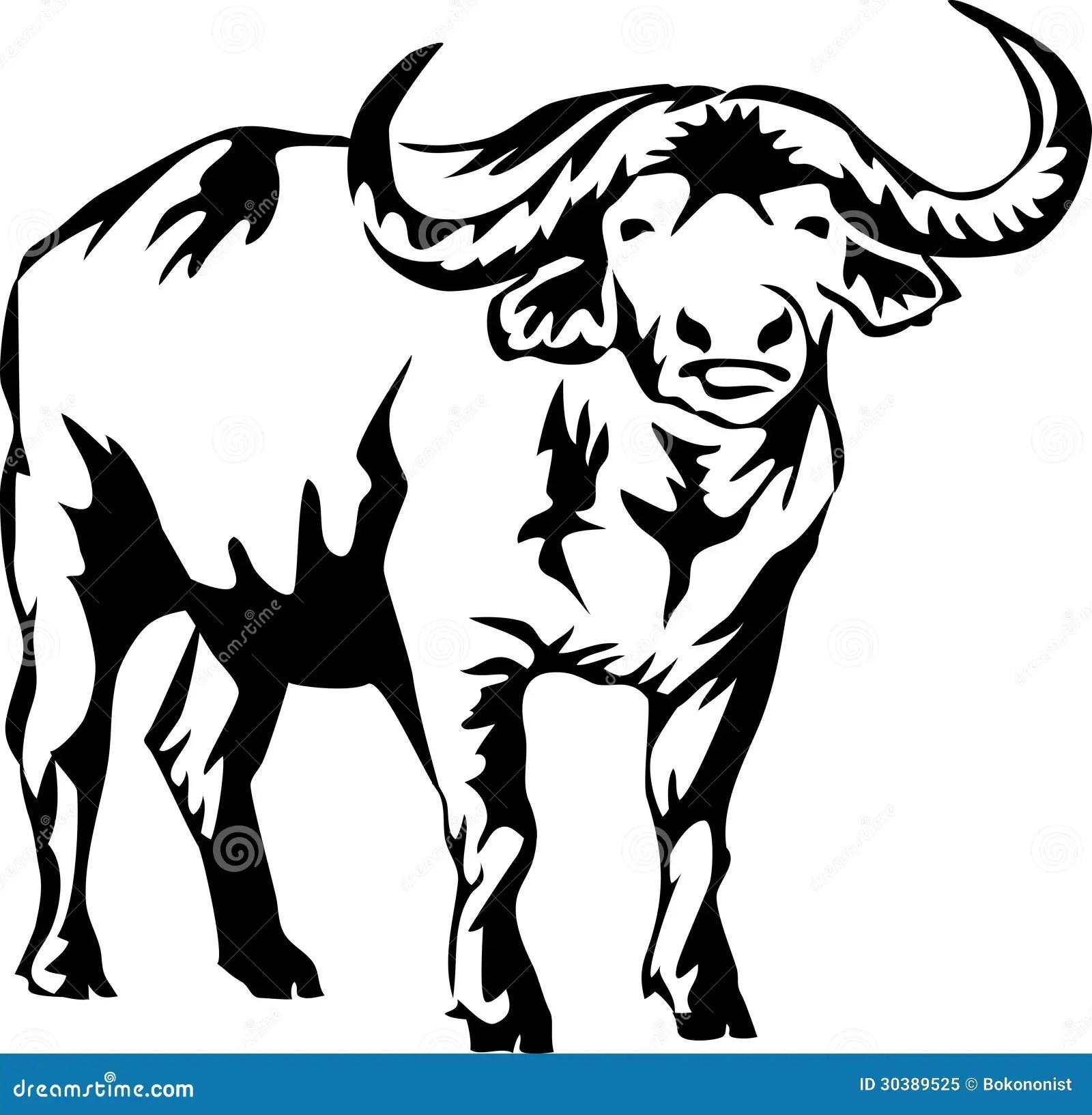 Water Buffalo Stock Vector Illustration Of Bush Horn
