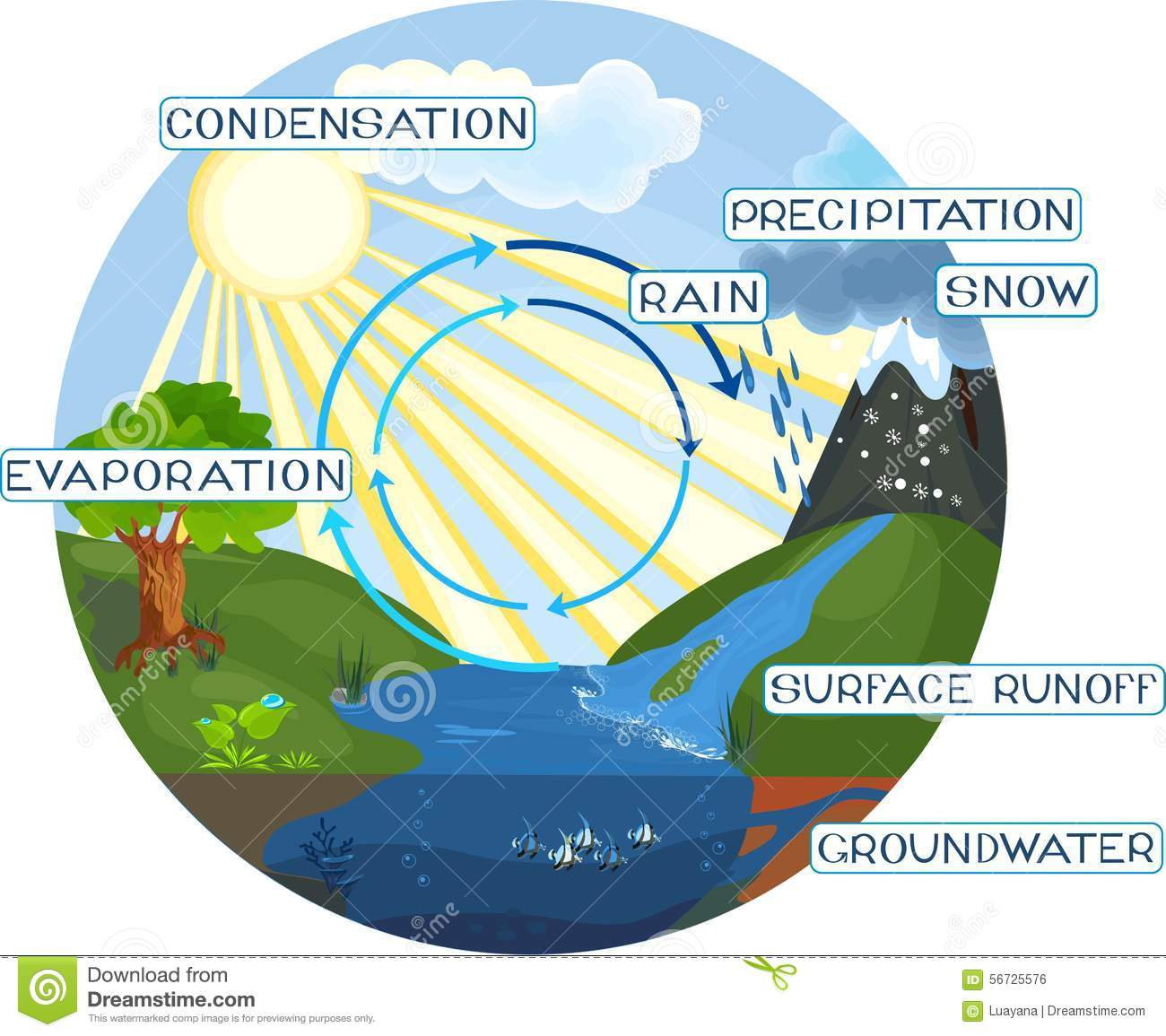 The Water Cycle Stock Vector