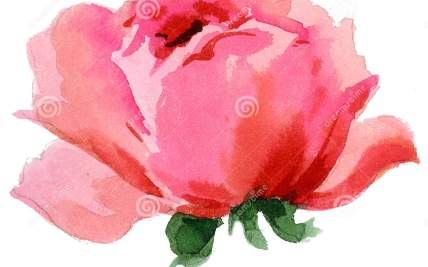 Pretty Paintings Single Flowers | Gardening: Flower and