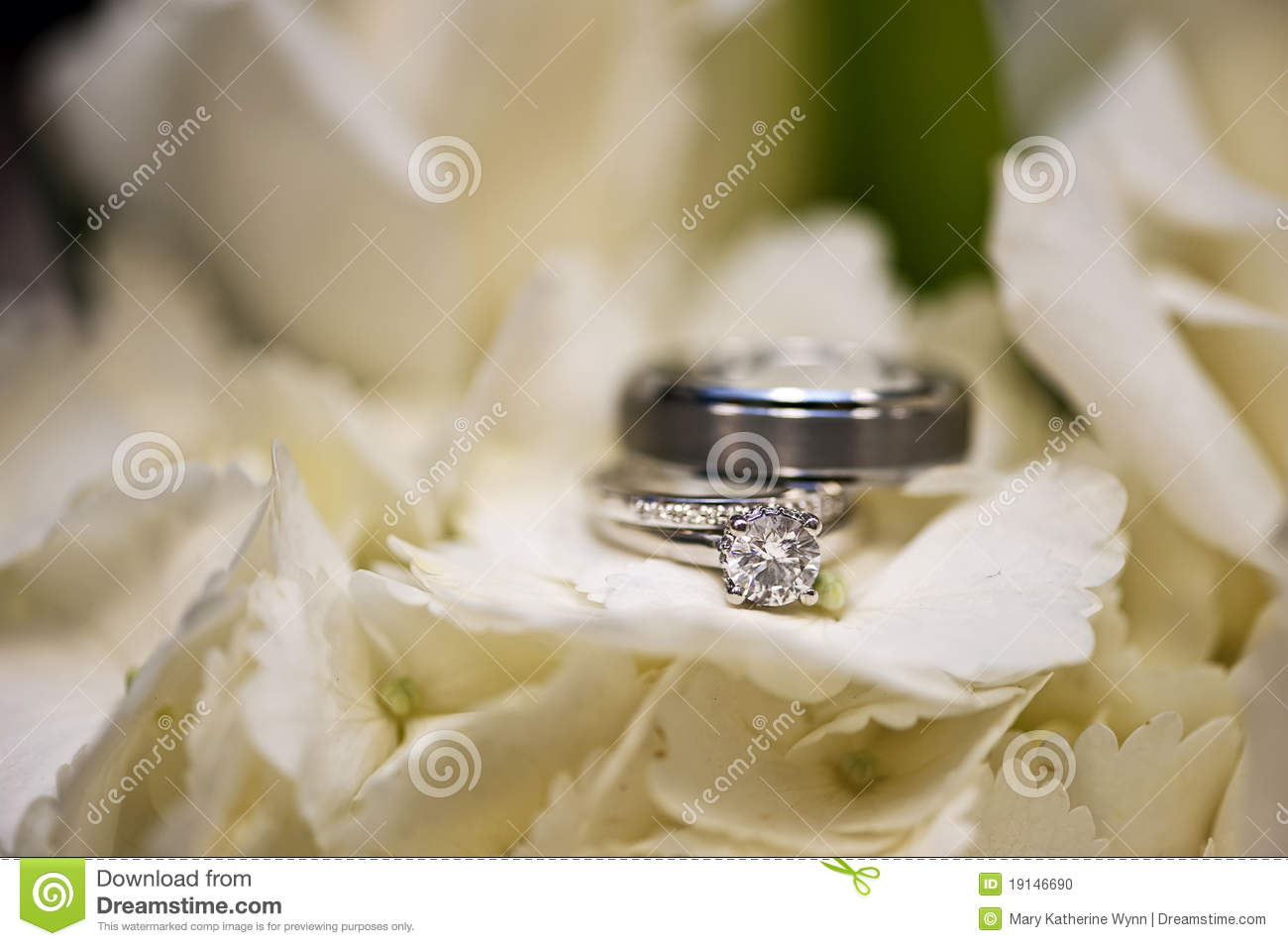 Wedding Rings In White Flowers Stock Photo Image Of