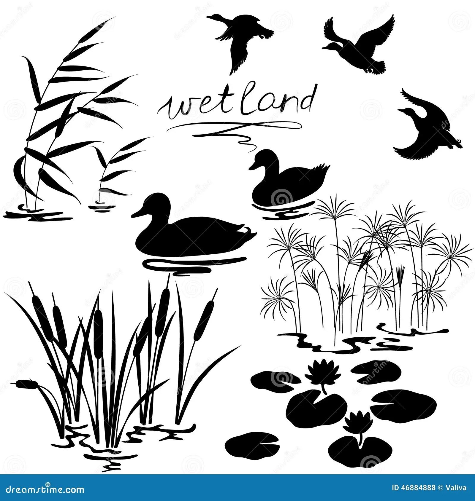 Wetland Plants Set Cartoon Vector