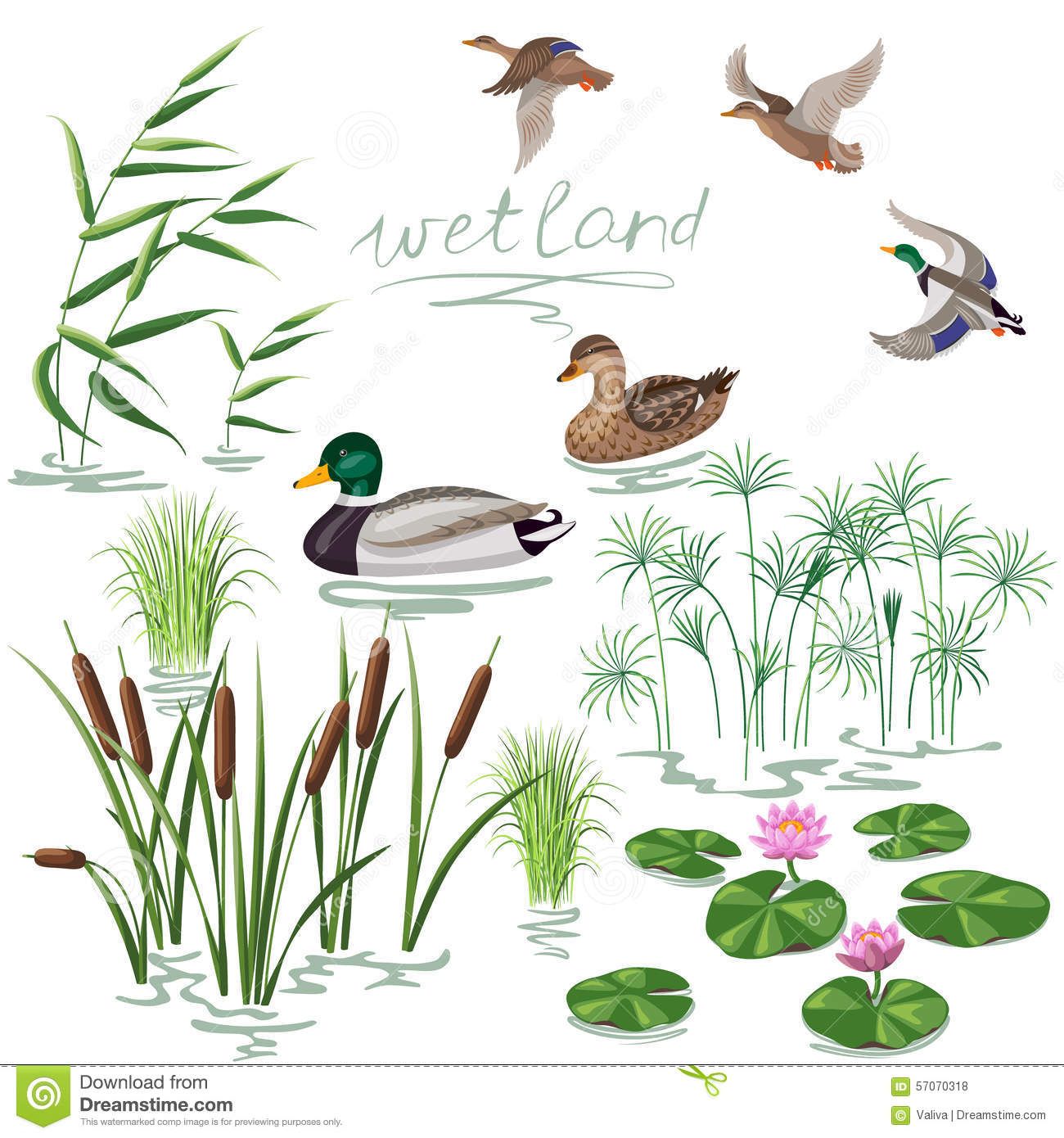 Wetland Plants And Ducks Set Stock Vector