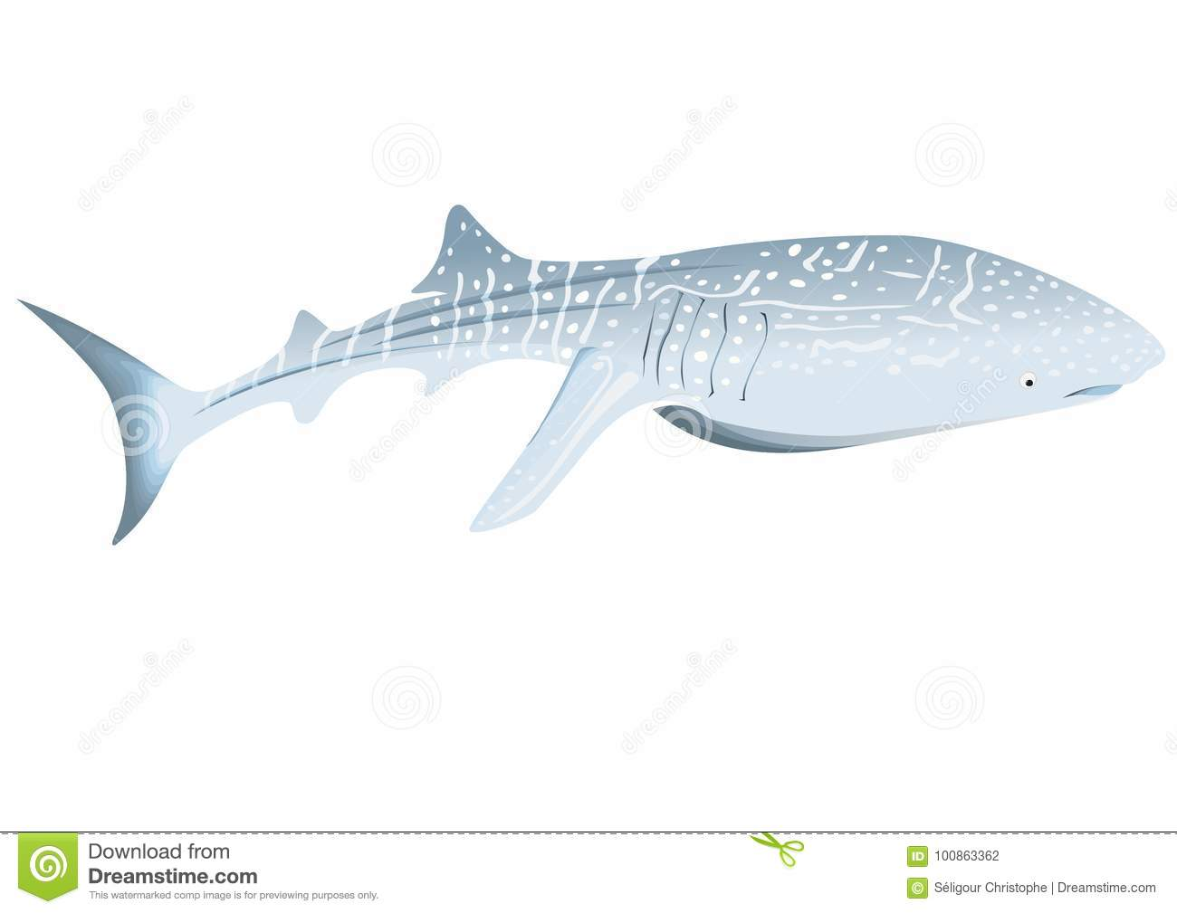 Fresh Whale Shark Pictures To Color