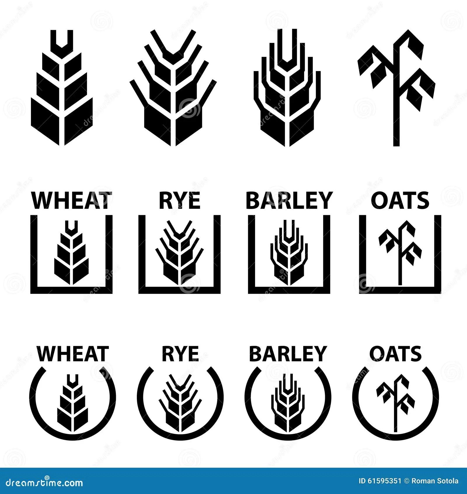 Wheat Rye Barley Oat Cereal Spike Ears Symbols Stock