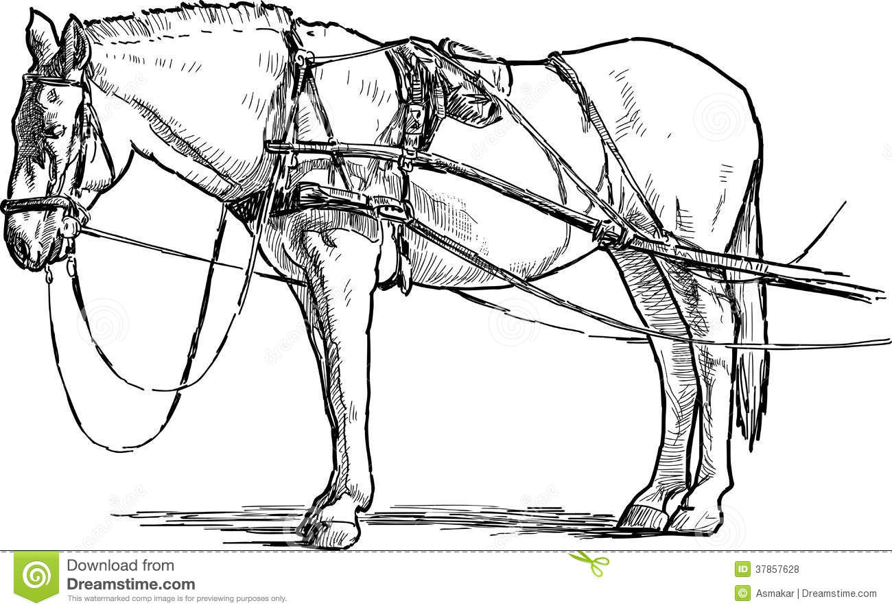 White Horse In Harness Royalty Free Stock Photos
