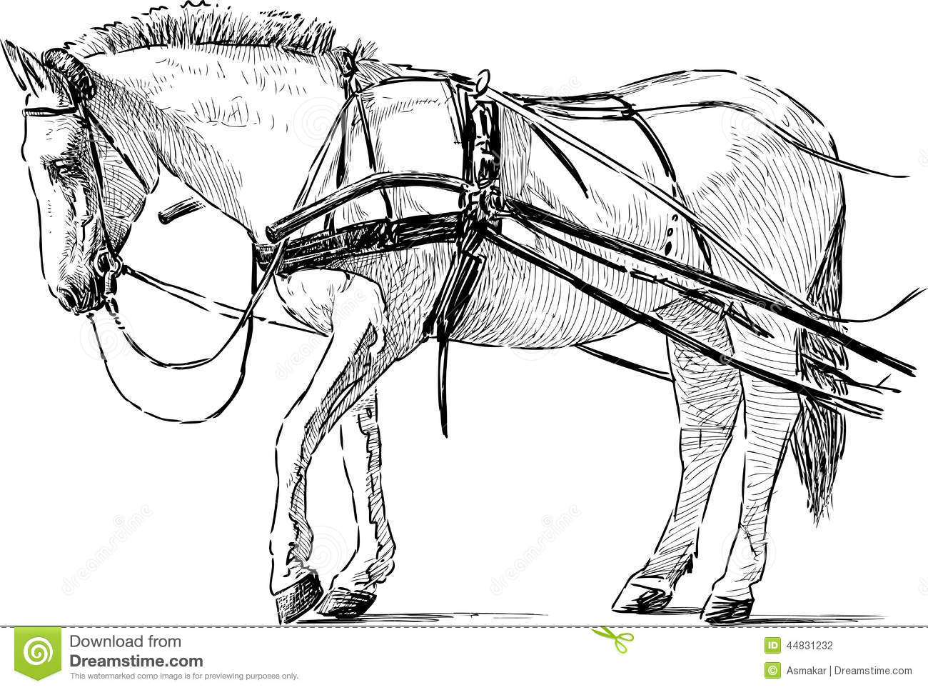 White Horse In The Harness Stock Vector Illustration Of Bridle