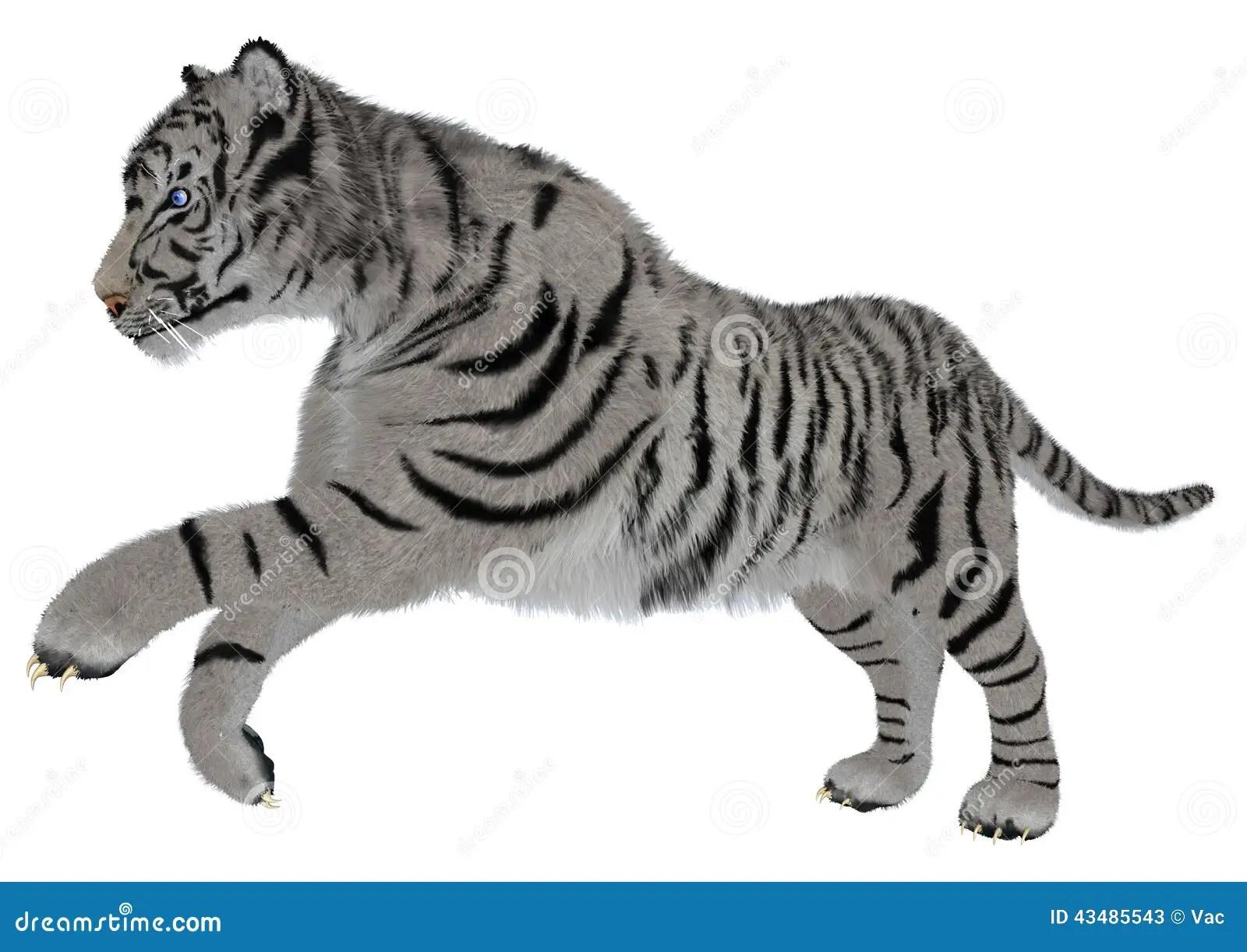 White Tiger Stock Illustration Illustration Of Stripes