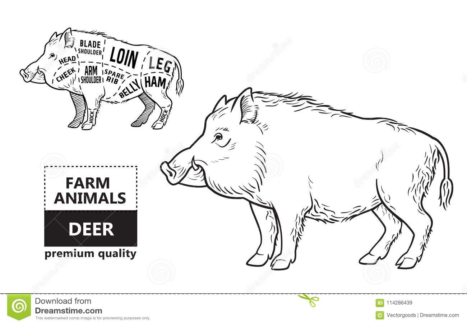 Wild Hog Boar Game Meat Cut Diagram Scheme
