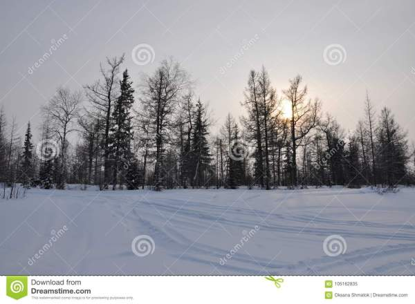 Winter Evening Landscape With Snow, Forest And Cold Sun ...