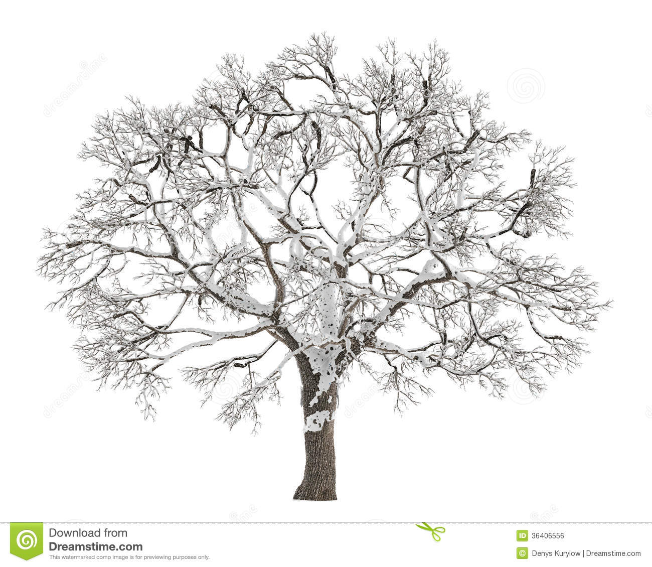 Winter Tree On Snow Isolated Royalty Free Stock Image