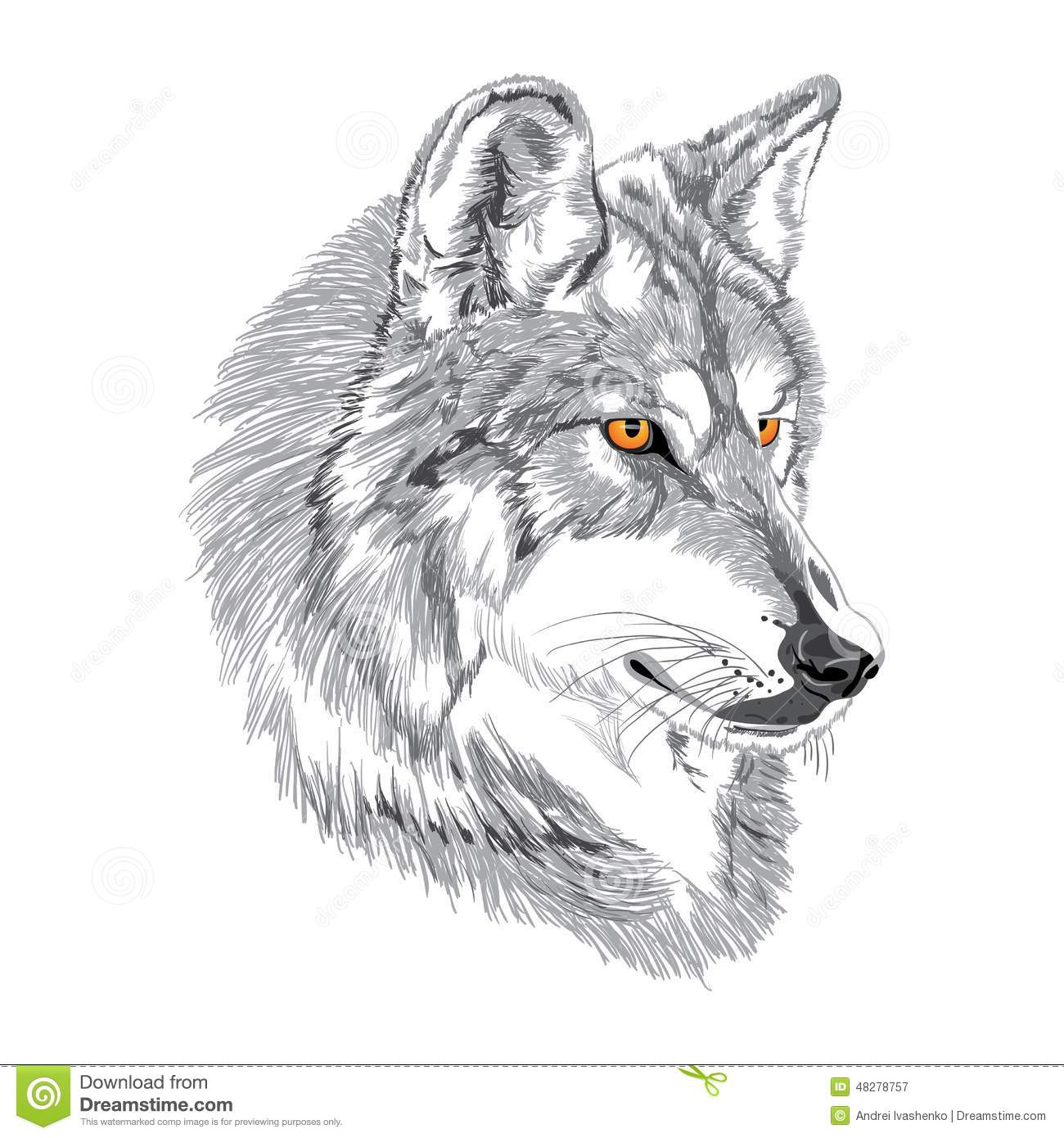 Wolf Muzzle Sketch Stock Vector