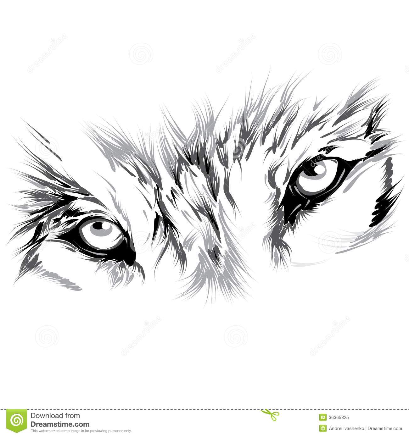 Wolfs Face Royalty Free Stock Photo