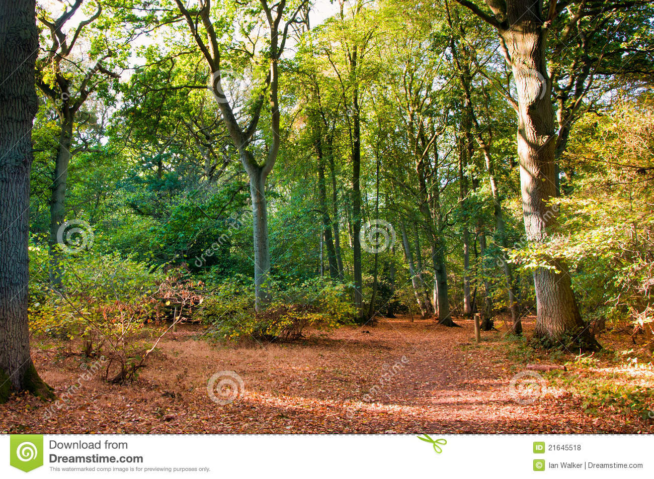 Woodland Scene In Autumn Fall Royalty Free Stock Photos