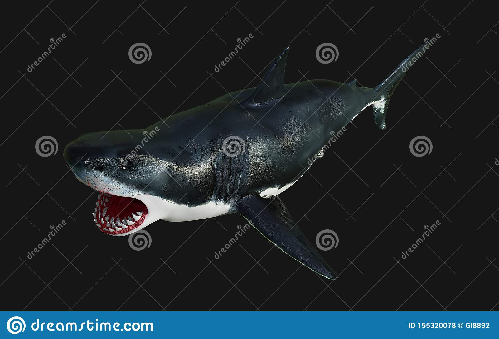 Great White Shark Isolate On Black Background With
