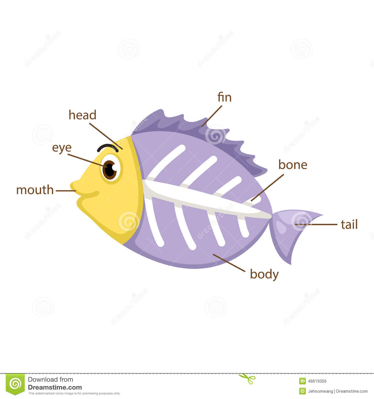 X Ray Fish Vocabulary Part Of Body Vector Stock Vector