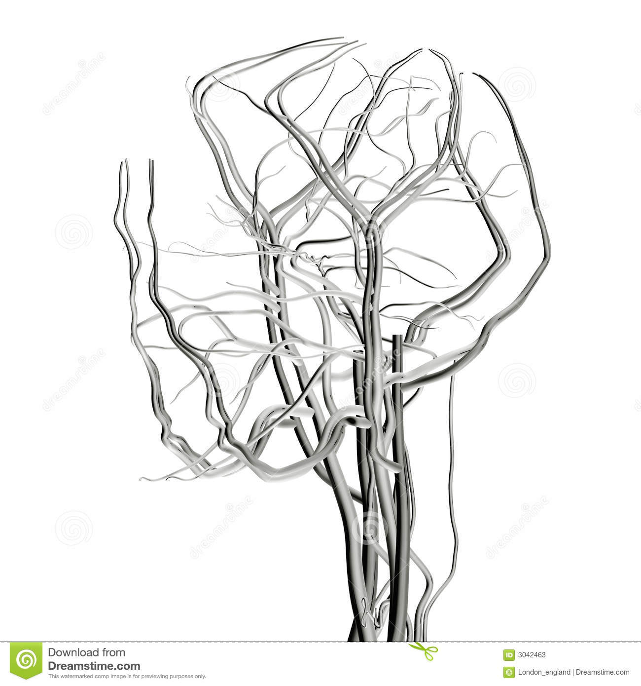 Head And Brain Arteries Royalty Free Stock Image
