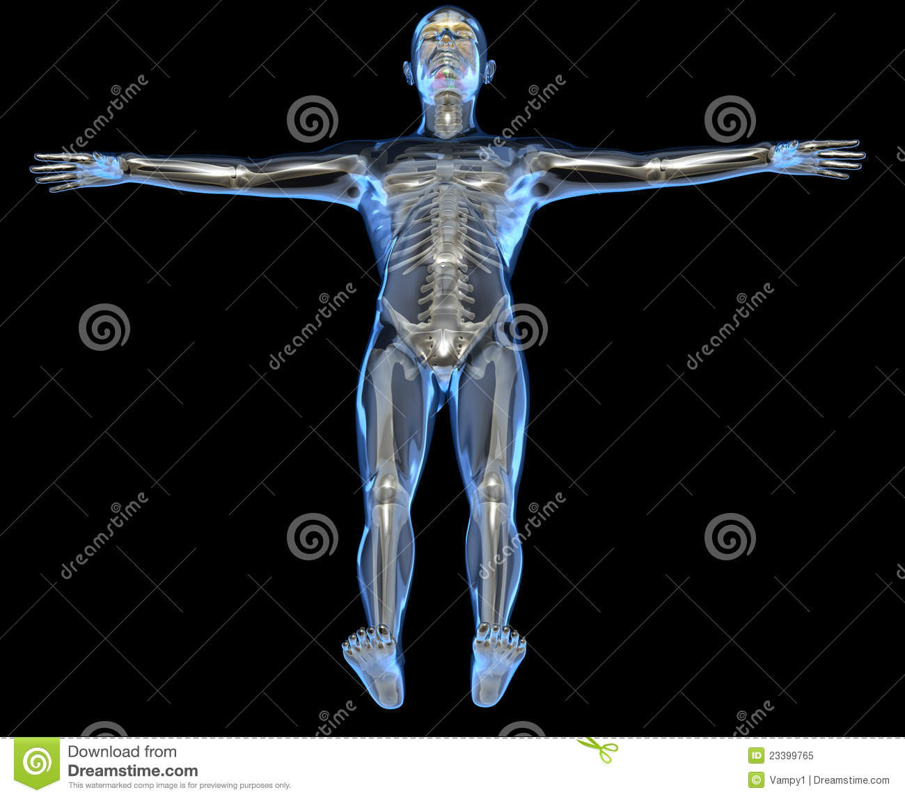 X Ray Of A Human Body Stock Illustration Illustration Of