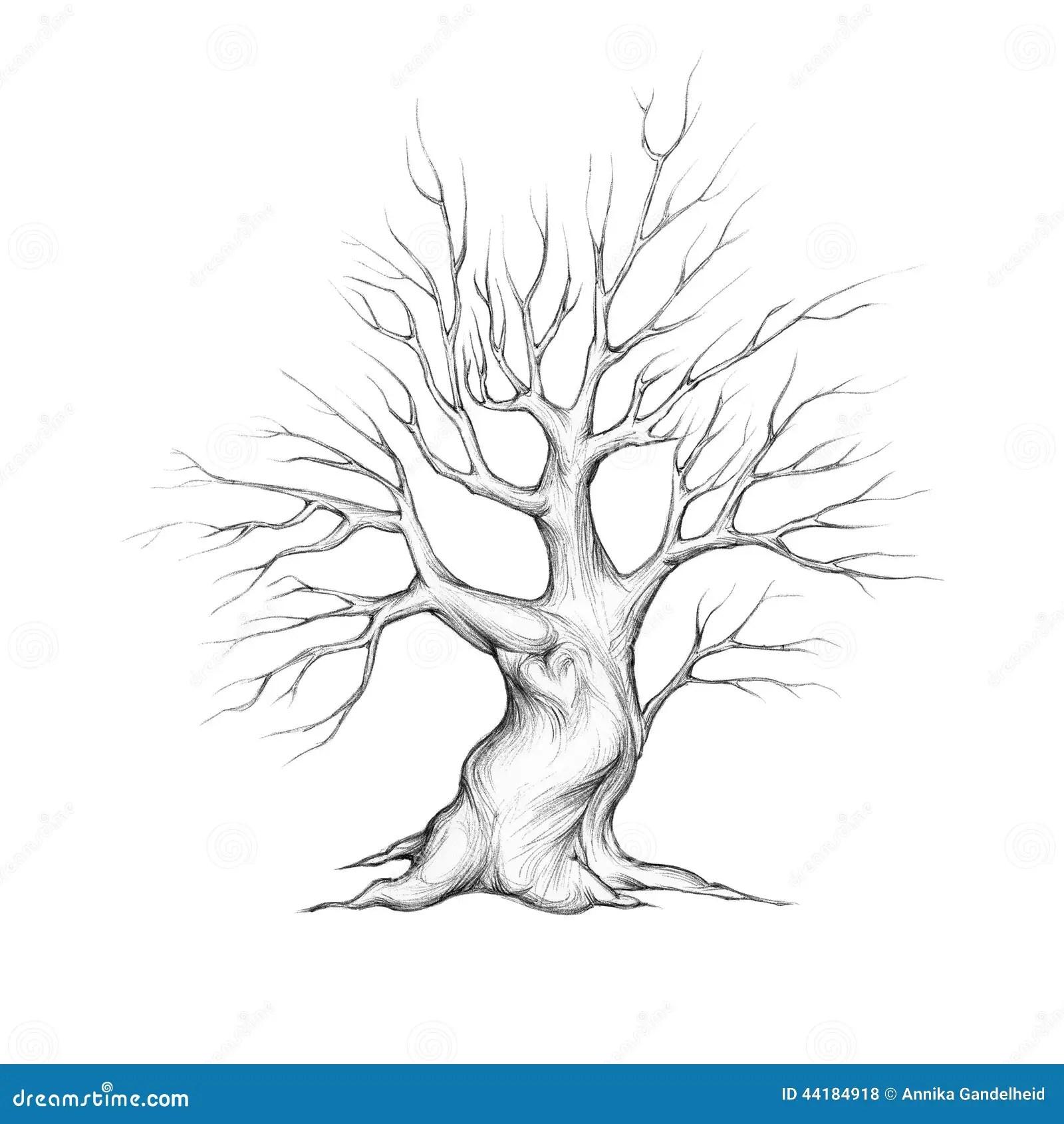 Fat Tree Trunk