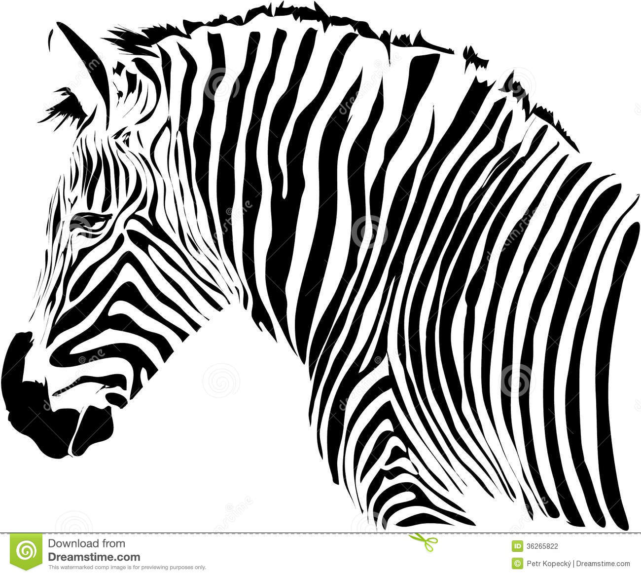 Zebra Illustration Stock Vector Illustration Of