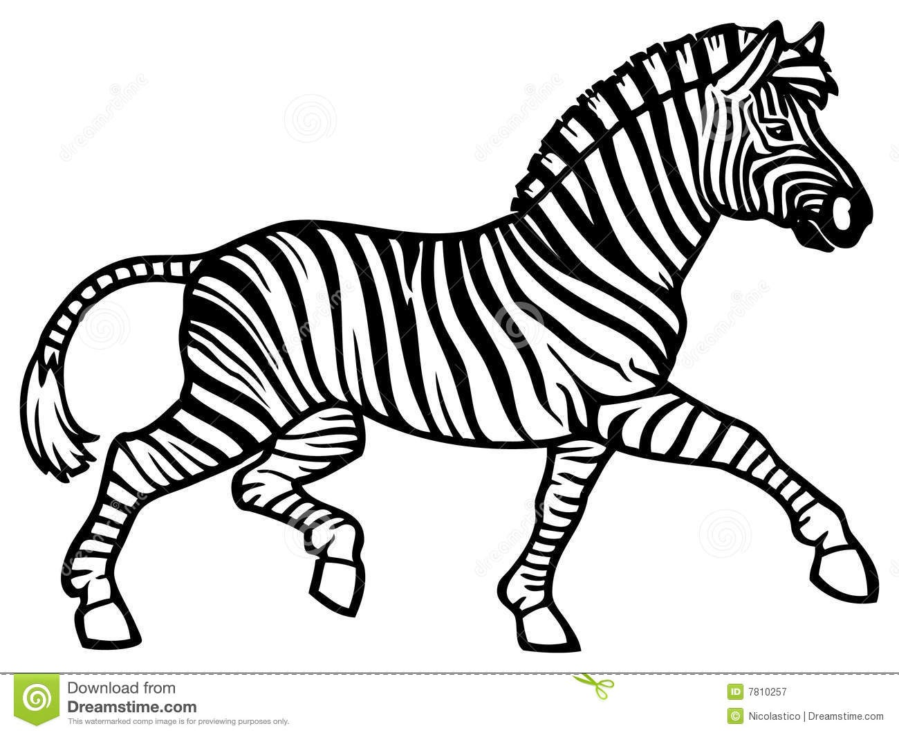 Zebra Running Stock Vector Illustration Of Wildlife