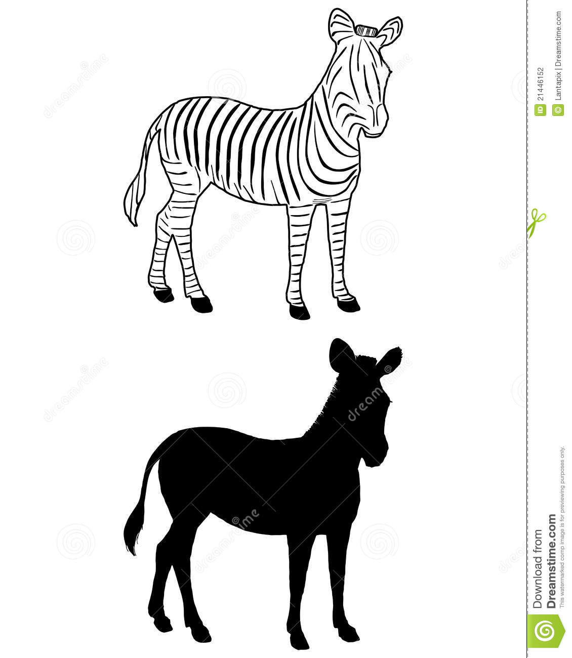 Zebra Silhouette Stock Vector Illustration Of Young