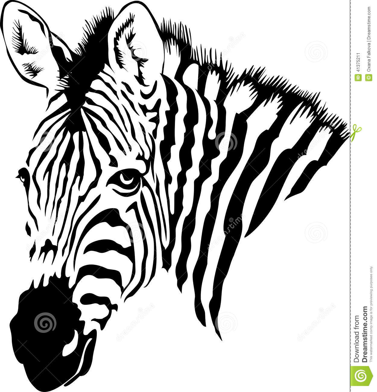 Zebra Stock Vector Illustration Of Wild Hide Skin